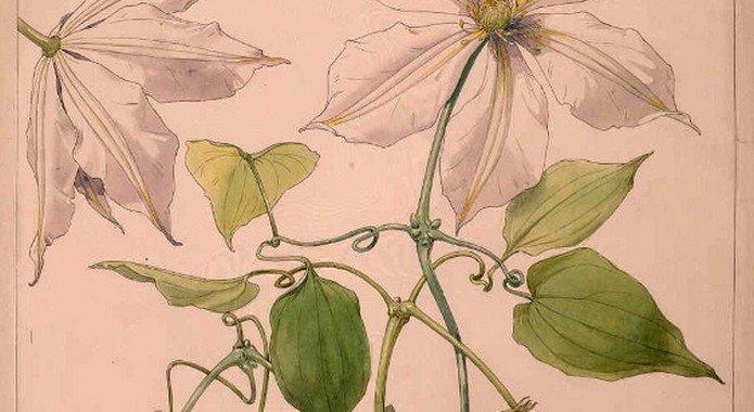 Les jardins secrets de Victor Lemoine, génie de la botanique dans Culture et patrimoine Victor-Lemoine