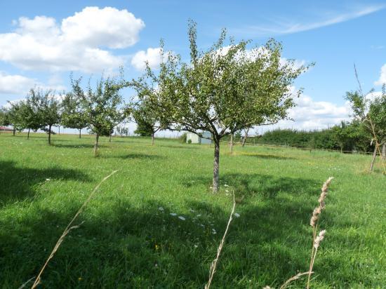 Pour le renouveau de la mirabelle en Moselle ! dans Agriculture verger-Moselle