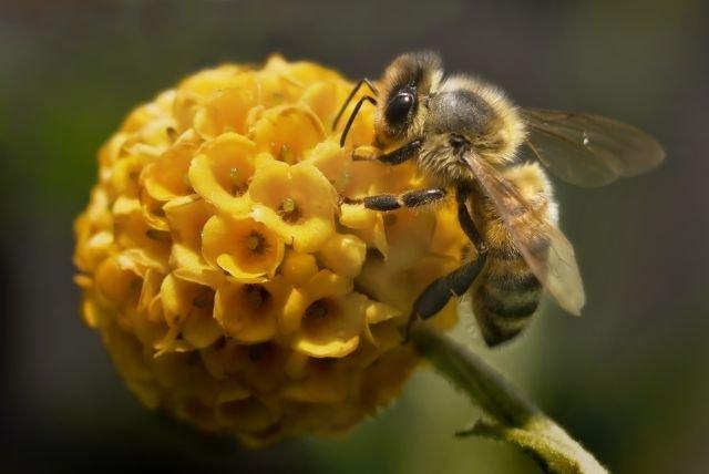 Des ruches sur la mairie de Bitche pour protéger la biodiversité dans Actualité abeille