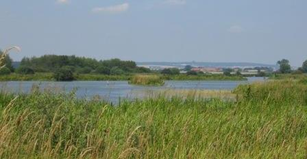 plaine et étang Bischwald modif