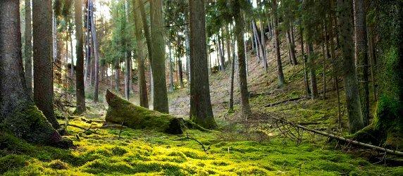 Comprendre la forêt pour mieux la protéger dans Actualité foret