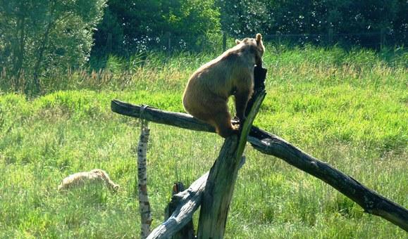 p1310461 animalier dans Découverte