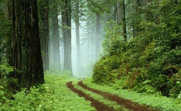 Le régime forestier de la Moselle dans Agriculture foret-moselle