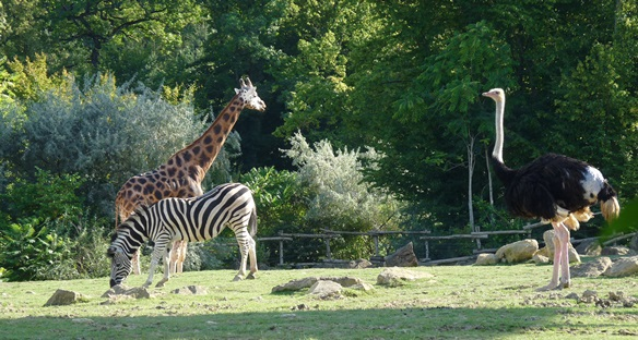 Plaine africaine Zoo Amnéville