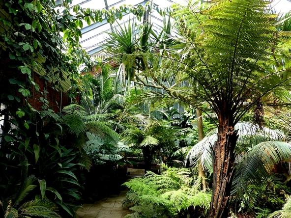 Petit Jardin Arbore