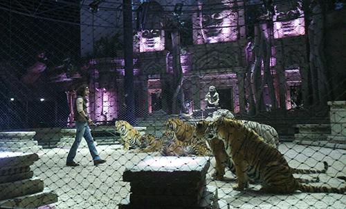 Tigerwolrd 2