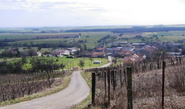 vignoble Vosges La Neuveville-sous-Montfort