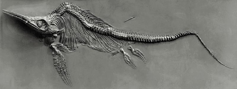 Ichthyosaure